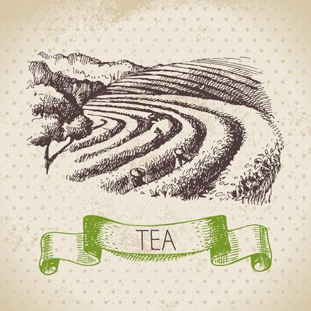 Tea Vintage Hintergrund. Hand gezeichnete Skizze Illustration. Menü-Design Standard-Bild - 26866022