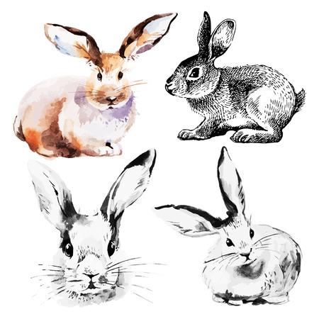 부활절 토끼의 집합입니다. 손으로 그린 스케치와 수채화 그림