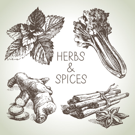 condiment: Kitchen herbs and spices. Hand drawn sketch design elements