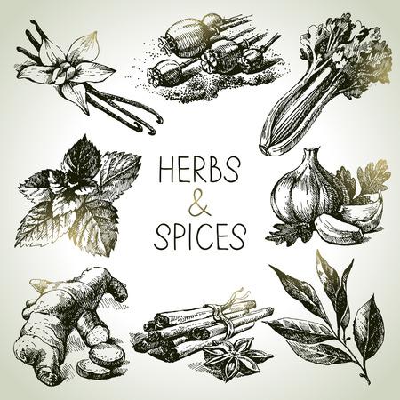 Keuken kruiden en specerijen. Hand getrokken schets iconen