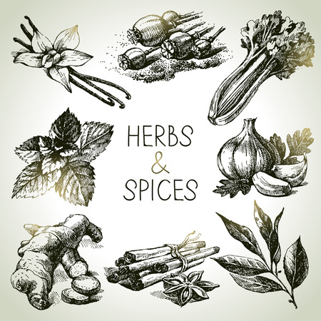 Kitchen herbs and spices. Hand drawn sketch icons Vector