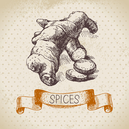 Kitchen herbs and spices. Vintage background with hand drawn sketch ginger Vector