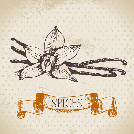 Kitchen herbs and spices. Vintage background with hand drawn sketch vanilla  Vector
