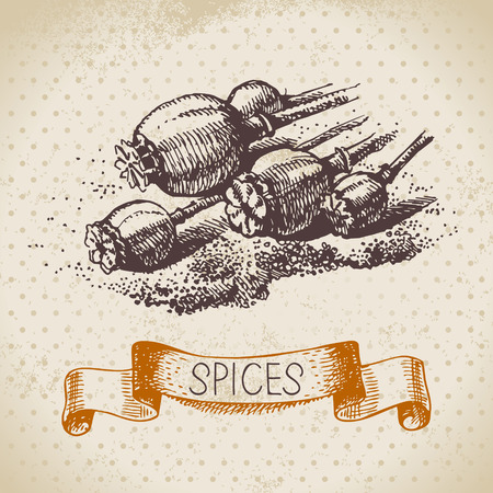 Kitchen herbs and spices. Vintage background with hand drawn sketch poppy seeds Vector