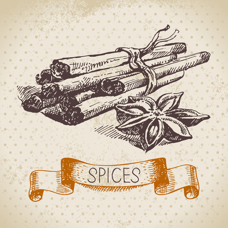 Kitchen herbs and spices. Vintage background with hand drawn sketch cinnamon Vector