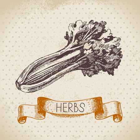 Kitchen herbs and spices. Vintage background with hand drawn sketch celery  Vector