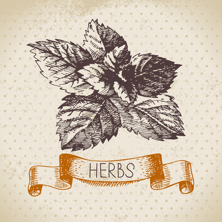 grass roots: Kitchen herbs and spices. Vintage background with hand drawn sketch mint Illustration