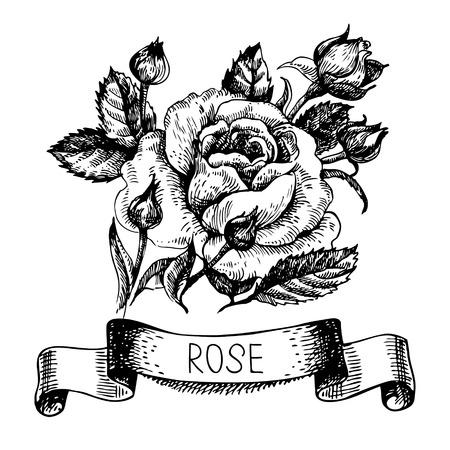 Croquis floral rose bannière avec le ruban. Illustration tirée de main Banque d'images - 27289868