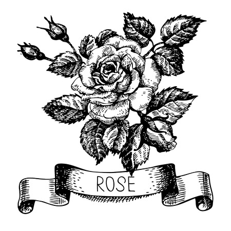 rose tattoo: Sketch floral rose banner with ribbon. Hand drawn illustration Illustration
