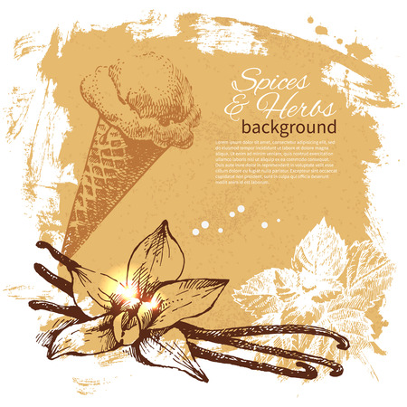 allspice: Vintage background with hand drawn sketch herbs and spices. Menu design