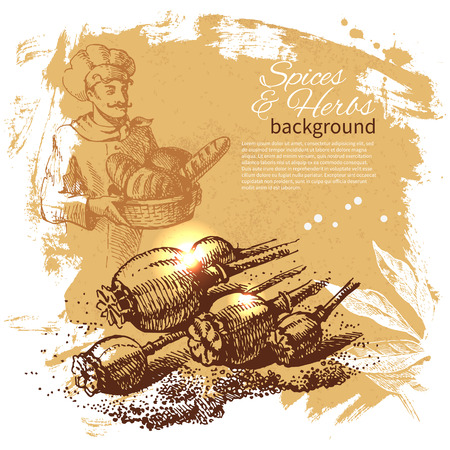 Vintage background with hand drawn sketch herbs and spices. Menu design  Vector