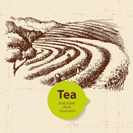 tea leaf: Tea vintage background. Hand drawn sketch illustration. Menu design
