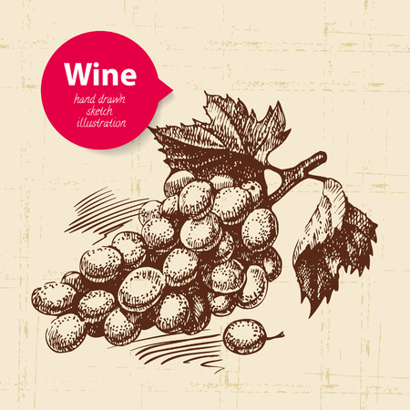 red grape: Wine vintage background with banner. Hand drawn sketch illustration of grapes