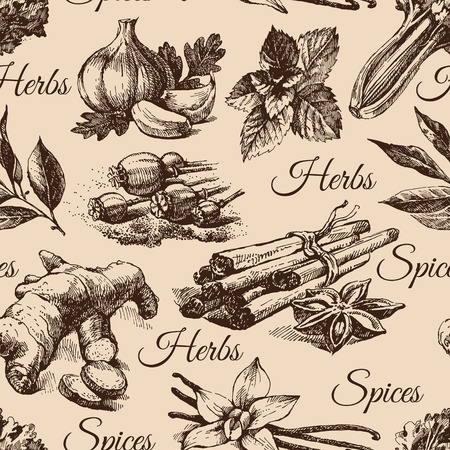gourmet: Seamless pattern of kitchen herbs and spices. Hand drawn sketch illustrations