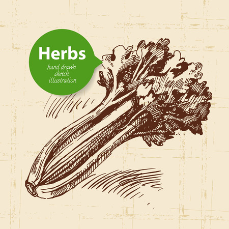 Kitchen herbs and spices. Vintage background with hand drawn sketch celery Illustration