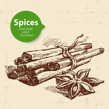 root vegetables: Kitchen herbs and spices. Vintage background with hand drawn sketch cinnamon