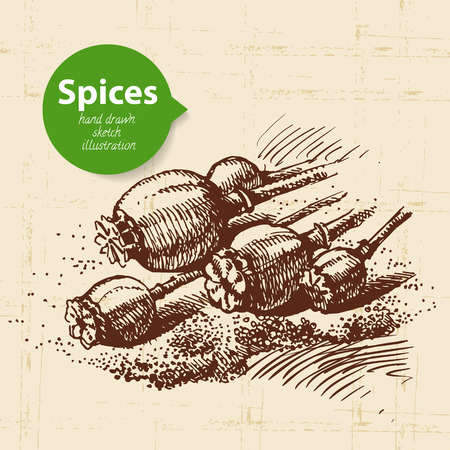 allspice: Kitchen herbs and spices. Vintage background with hand drawn sketch poppy seeds