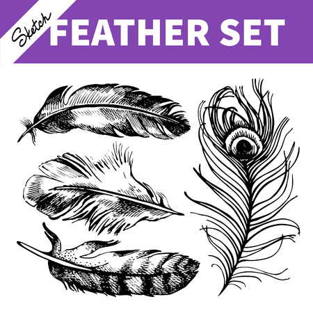 Feather set. Hand drawn sketch  illustrations  Vector