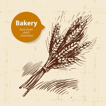 produits céréaliers: Boulangerie blé croquis fond. Illustration tirée par la main de cru