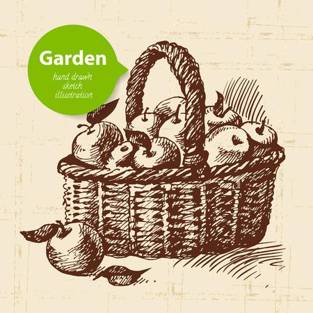 hand cart: Vintage sketch apples in the basket background. Hand drawn design