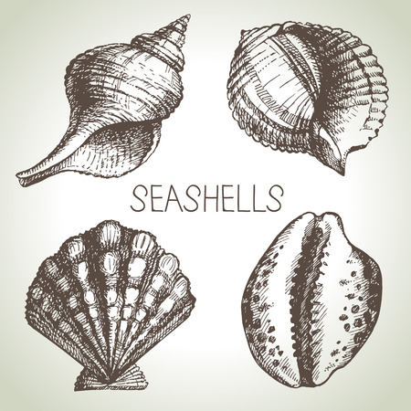 scallops: Seashells hand drawn set  Sketch design elements