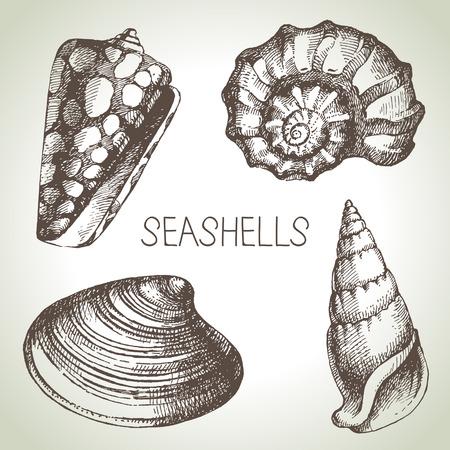 clam illustration: Seashells hand drawn set  Sketch design elements