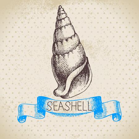 conch: Seashell hand drawn sketch  Vintage illustration