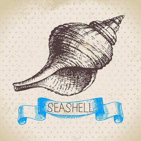 Seashells hand drawn sketch  Vintage illustration Vector