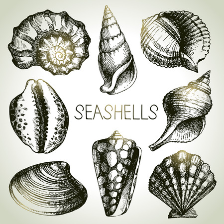 scallop: Seashells hand drawn set. Sketch design elements
