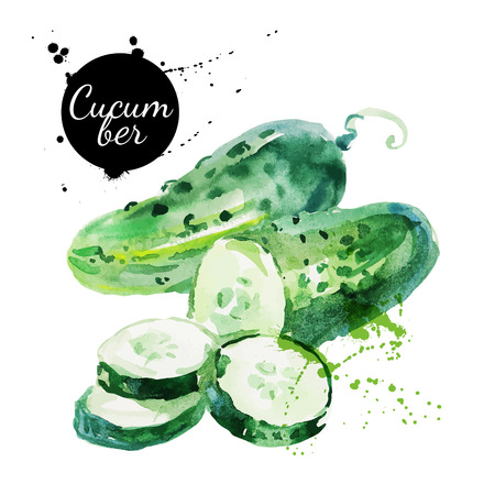 Green cucumber. Hand drawn watercolor painting on white background. Vector illustration Çizim