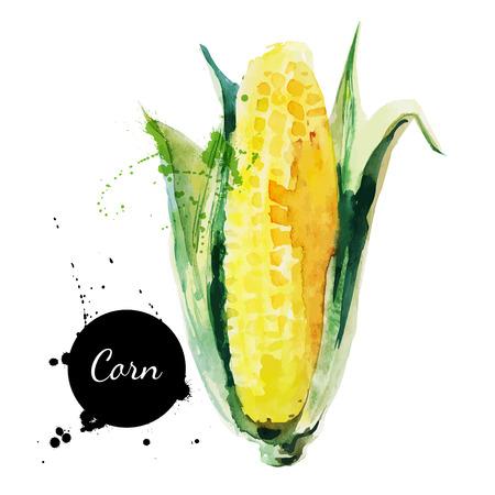 mazorca de maiz: Mazorca de ma�z con hojas Dibujado a mano la pintura acuarela sobre fondo blanco Vector ilustraci�n Vectores