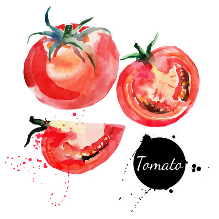Tomato set  Hand drawn watercolor painting on white background  Vector illustration