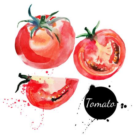 tomate: Tomate mettre la main peinture à l'aquarelle dessinée sur fond blanc Vector illustration Illustration