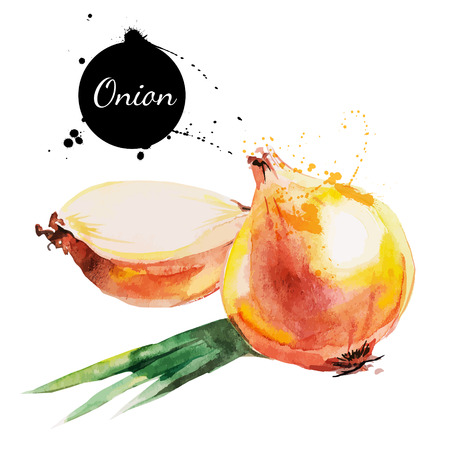 Onion  Hand drawn watercolor painting on white background  Vector illustration