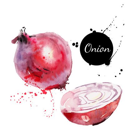 food label: Red onion  Hand drawn watercolor painting on white background  Vector illustration Illustration