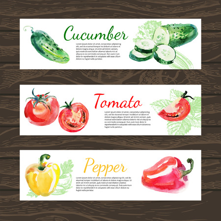 Watercolor and sketch vegetables organic food horizontal banner set. Design with cucumber, tomato and peppers. Vector illustration
