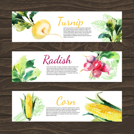 Watercolor and sketch vegetables organic food horizontal banner set. Design with corn, radish, turnip. Vector illustration Vector
