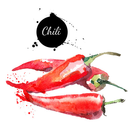 Chilli. Hand drawn watercolor painting on white background. Vector illustration