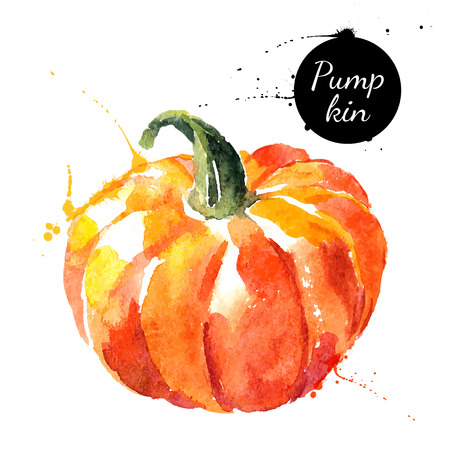 vegetables on white: Pumpkin. Hand drawn watercolor painting on white background. Vector illustration
