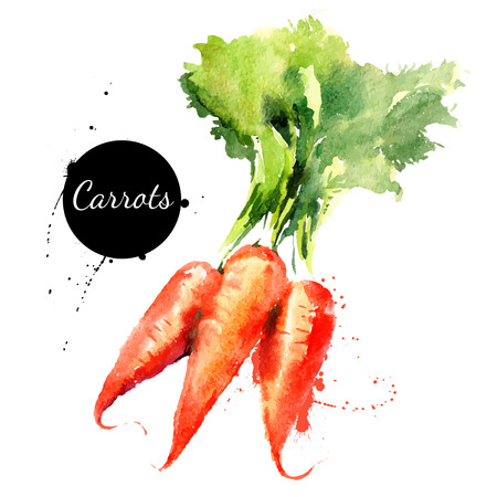 Zanahorias. Mano acuarela dibujada sobre fondo blanco. Ilustración vectorial Foto de archivo - 32160924