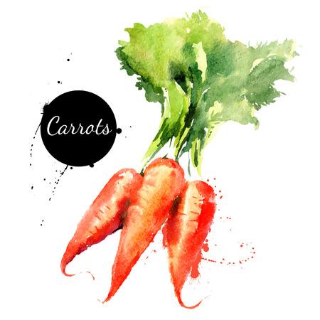zanahoria: Zanahorias. Mano acuarela dibujada sobre fondo blanco. Ilustración vectorial