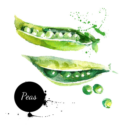 summer food: Peas. Hand drawn watercolor painting on white background. Vector illustration