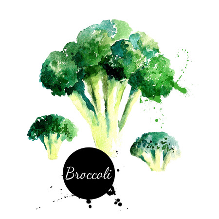 Broccoli. Hand drawn watercolor painting on white background. Vector illustration