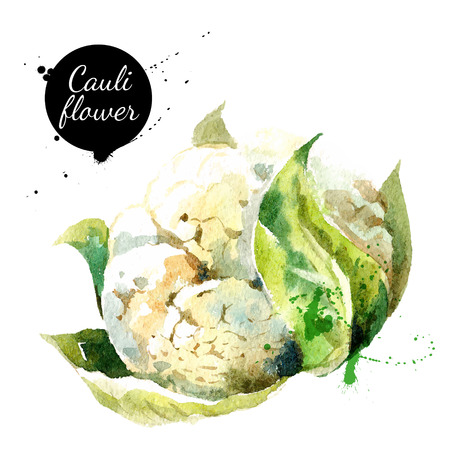 Cauliflower. Hand drawn watercolor painting on white background. Vector illustration  イラスト・ベクター素材