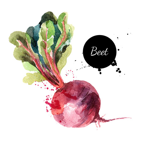 food on white: Beet. Hand drawn watercolor painting on white background. Vector illustration