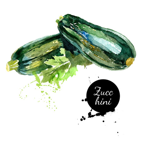 Zucchini. Hand drawn watercolor painting on white background. Vector illustration Vettoriali