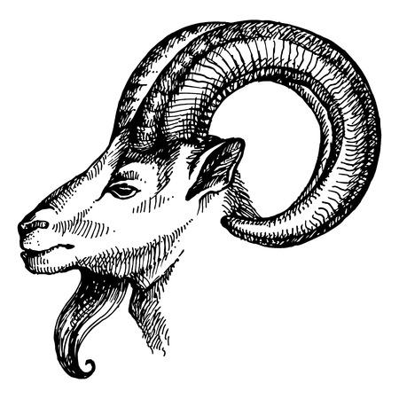 手描きのスケッチは、ヤギの肖像画。ベクトル イラスト
