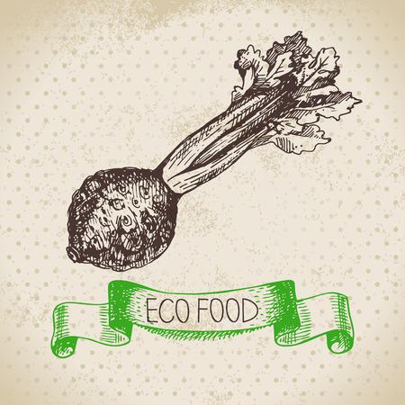 celery: Hand drawn sketch celery vegetable. Eco food background.Vector illustration