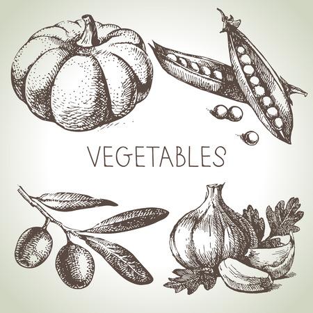 Hand drawn sketch vegetable set. Eco foods.Vector illustration Vector
