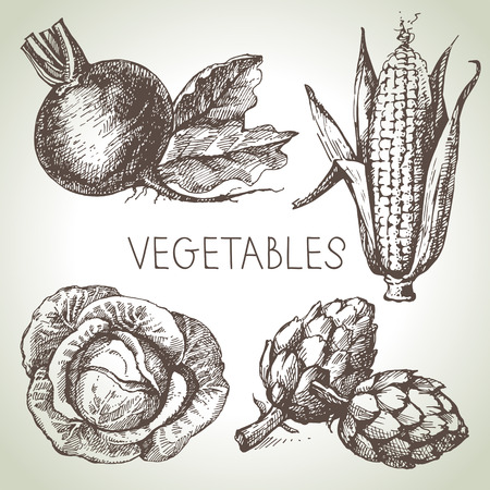 artichoke: Hand drawn sketch vegetable set. Eco foods.Vector illustration